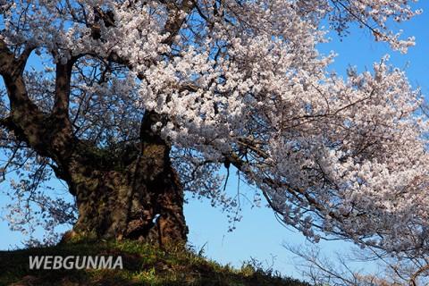 行人塚と芋うえ桜