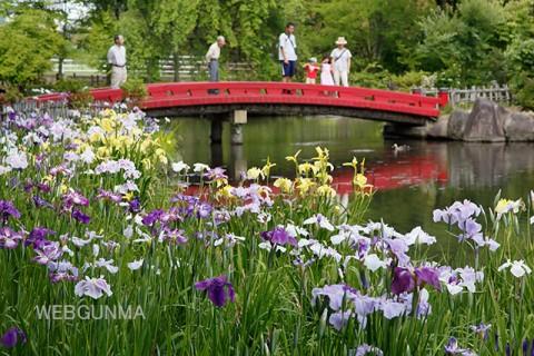 浜川公園の花しょうぶ
