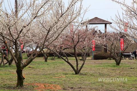 箕郷梅林 みさと梅公園(蟹沢会場)の梅林と見晴台