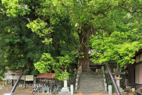 桐生城跡日枝神社のクスノキ群