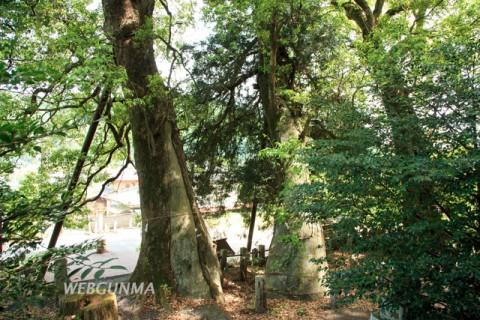 日枝神社の拝殿前に並ぶクスノキ