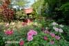 龍真寺のぼたん園