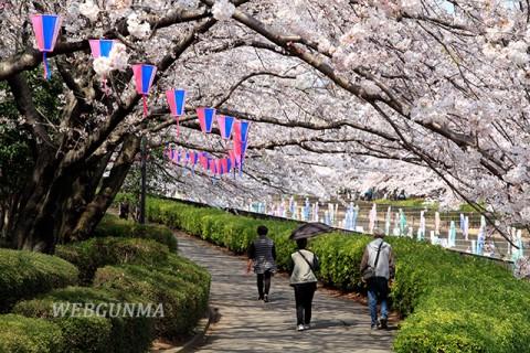 鶴生田川の桜並木