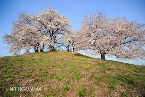 白石稲荷山古墳と桜