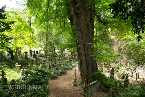 大銀杏と傍らの七日市藩重臣の墓