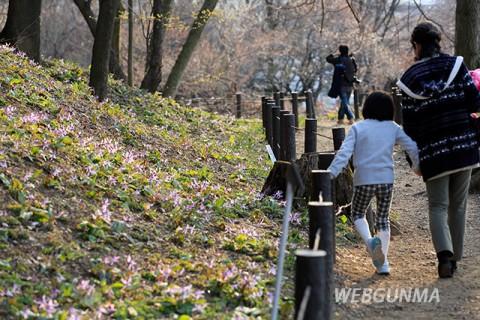 岩宿の里 カタクリと遊歩道
