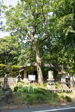 榛東村指定天然記念物のモクゲンジ