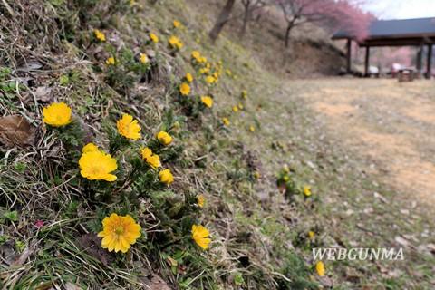 虻田福寿草の里の風景