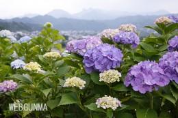 下仁田あじさい園から遠景に望む県境の山々