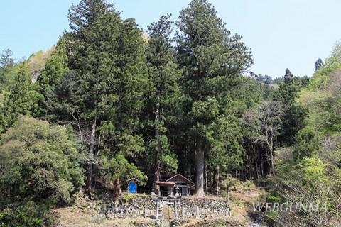 大仁田神社の大杉引き写真(南牧村)