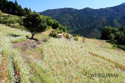 秋畑那須地区のそば畑「ちぃじがき蕎麦の里」