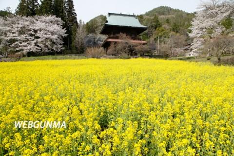 応永寺山門前の菜の花畑