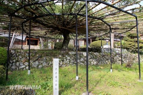 応永寺の傘松