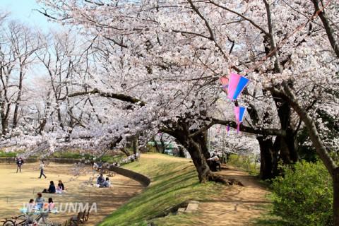 城之内公園の御堀の桜