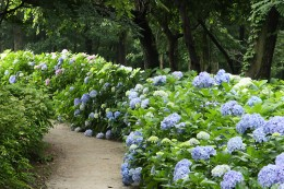 道の駅「赤城の恵」 荻窪公園内の散策路