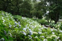道の駅「赤城の恵」 荻窪公園 木々に囲まれ