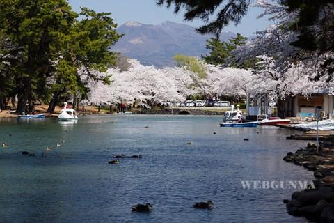 敷島公園ボート池と桜