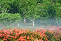 早朝の赤城白樺牧場