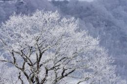 冬場の白樺牧場