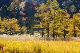 芳ヶ平(芳が平)の秋景