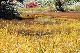 芳ヶ平 湿原