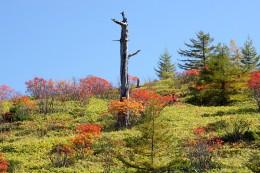 ナナカマドの秋景