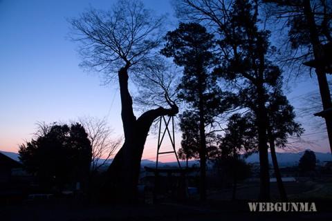 早朝の川田神社の大ケヤキ