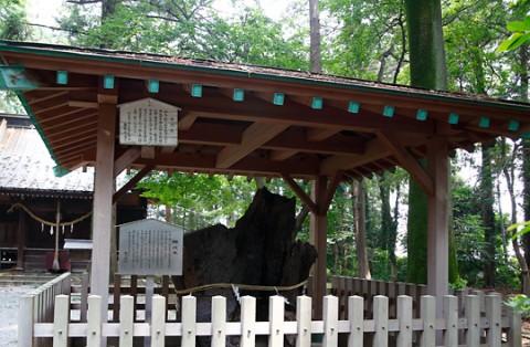 生品神社神代木・新田義貞が軍旗を掲げたクヌギ