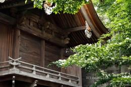 群馬県指定重要文化財の八幡宮本殿
