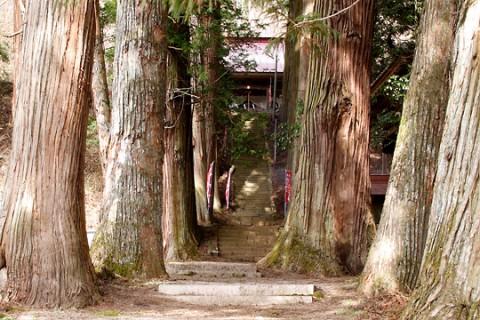 高山村 三島神社杉並木