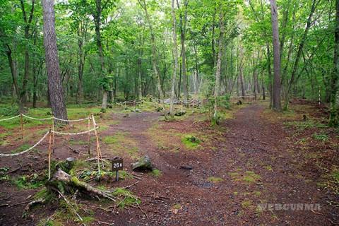 緑に包まれた浅間山溶岩樹型