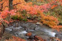 船尾滝紅葉